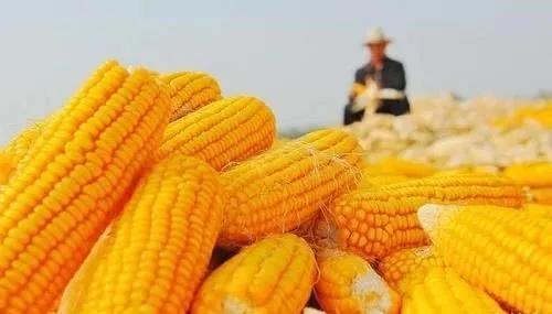 国内饲料用粮需求增加,带动粮食进口大幅增长