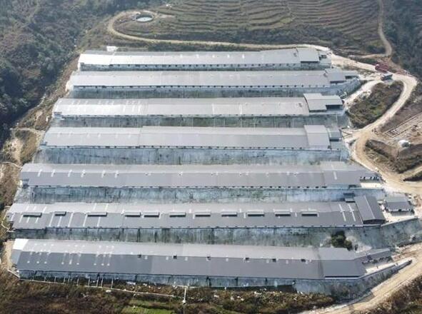 四川宁南:下拨178万元补贴全县2020年新建生猪规模养殖场18个!