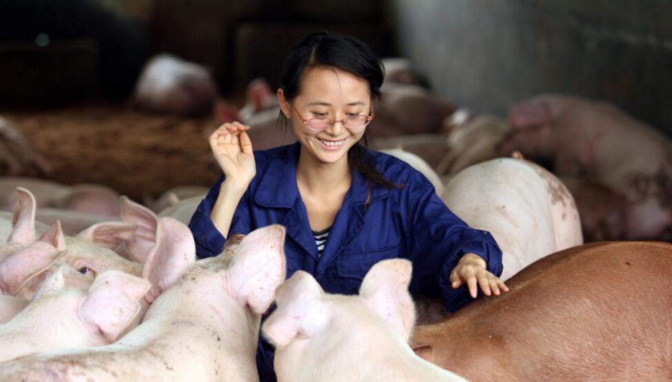 """3月2日生猪价格上涨""""底气十足""""!东北一天涨1块多!有望涨回30元?"""