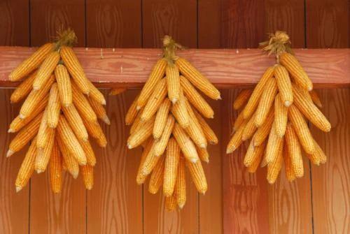 3月2日全国玉米价格行情,玉米价格继续上涨,华北涨幅在7元/吨上下!