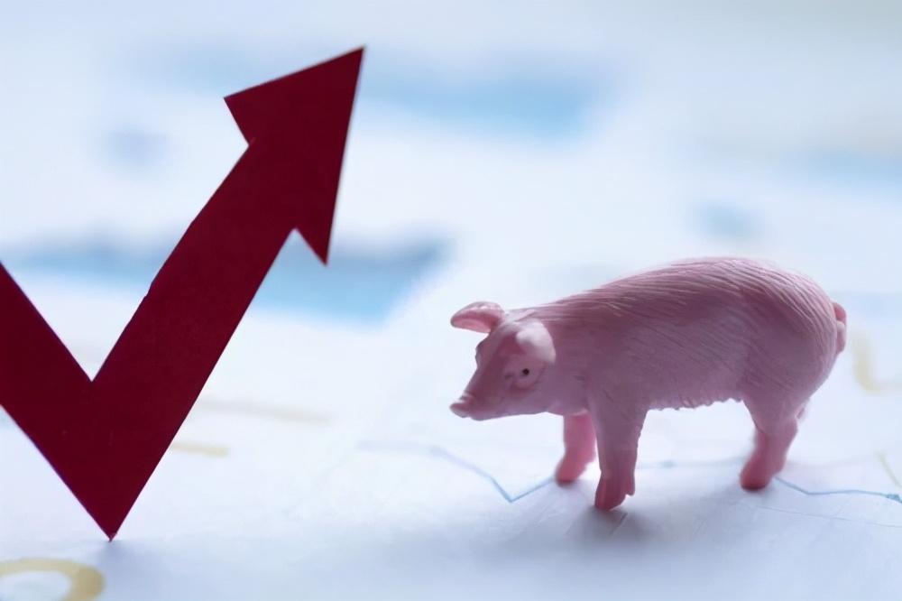 """生猪价格上涨""""底气十足""""!东北一天涨1块多!有望涨回30元?"""