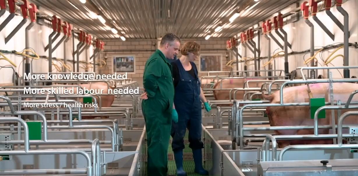 荷兰仔猪营养饲喂方案以及设备技术