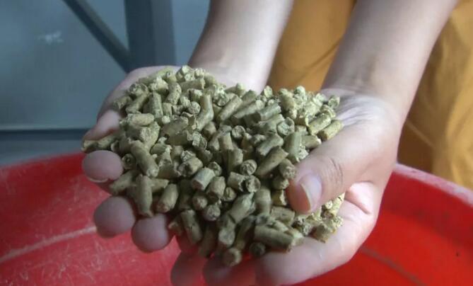玉米最高报3200元/吨!新希望、正邦、海大等饲料涨125元/吨,新一轮涨价潮要来了?