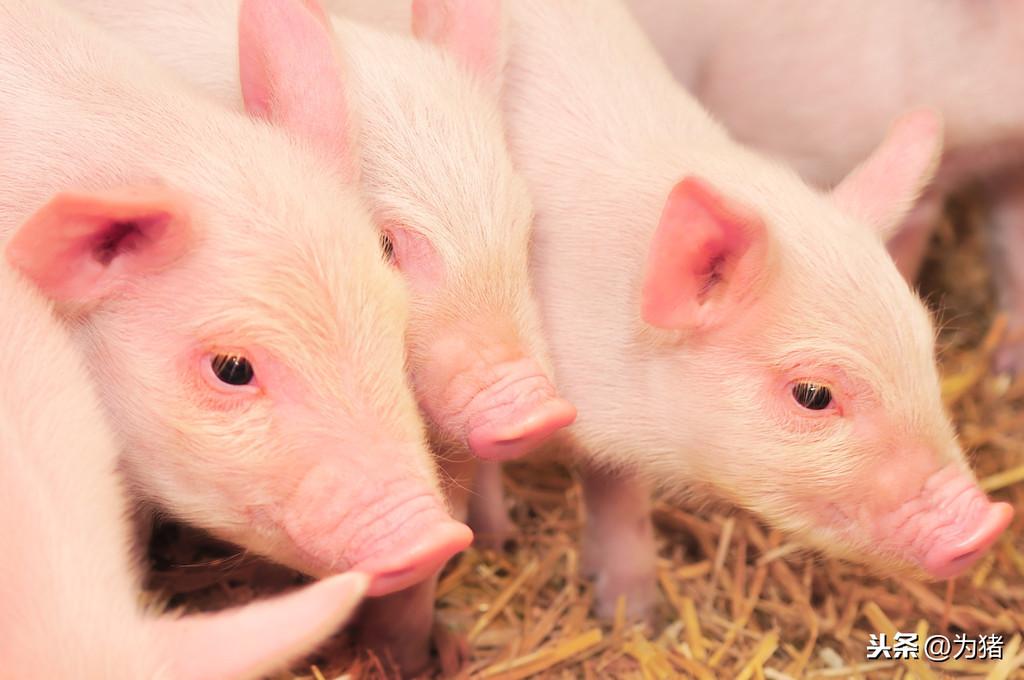 养猪场的生物安全措施