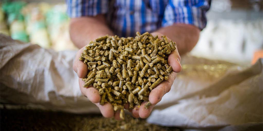 """饲料多番涨价,玉米已经变成""""金玉米"""",这次连预混料也""""逃不了""""?"""