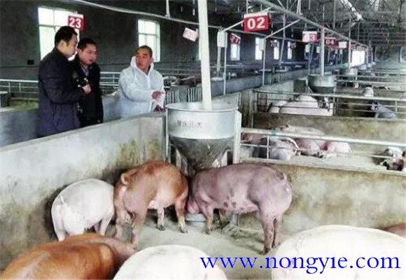 猪场管理的关键要点