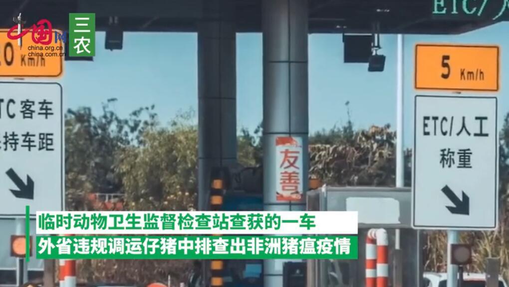 农业农村部:云南富宁从外省违规调运仔猪中排查出非瘟疫情