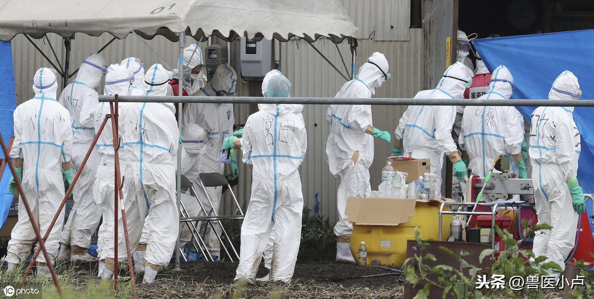 生物安全被很多人误以为只是消毒,其实做好这些很关键