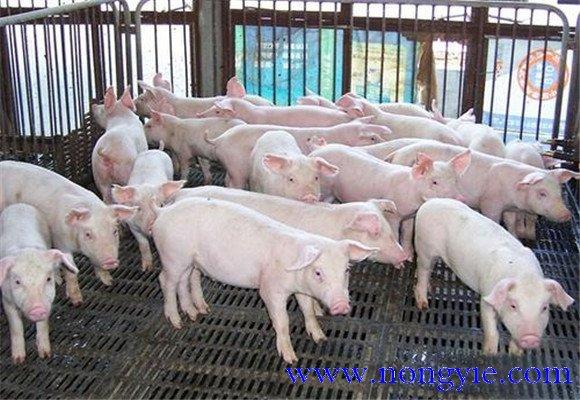 猪场的计划管理