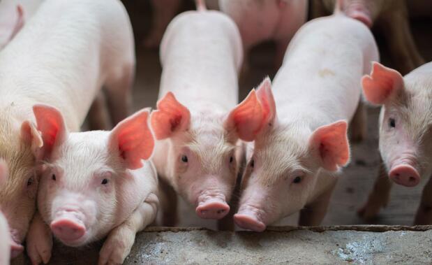 江苏:推进畜牧业高质量发展,猪肉自给率保持70%以上!