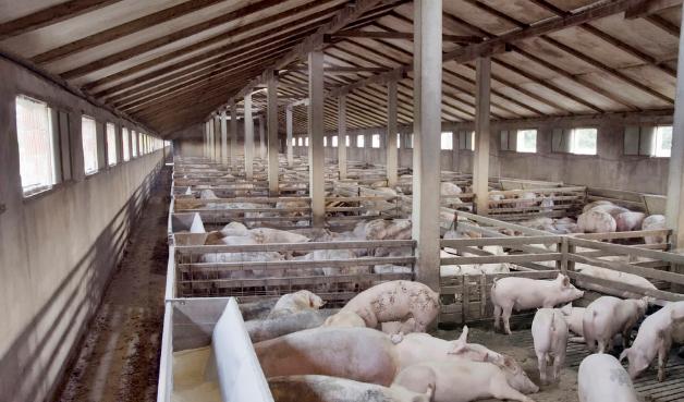 4种猪舍通风设计,南北干湿都能解决,选择适合自己养猪场的设计!
