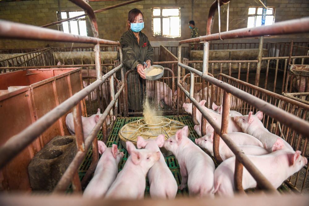 猪价虽下跌,但A股养猪龙头仍大赚,有公司两月收入123亿