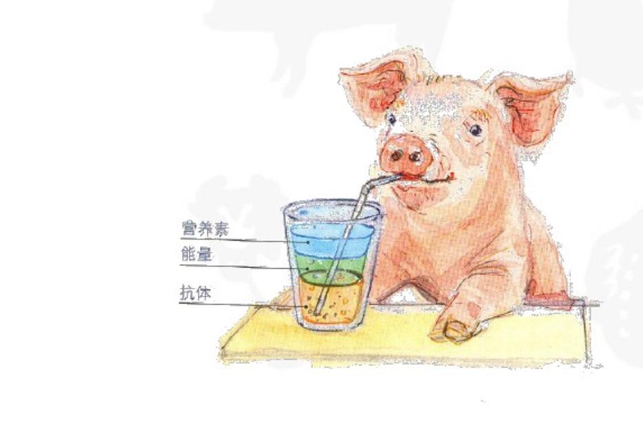 """规模化猪场仔猪成活率95%以上的""""秘诀之一"""",值得散养户学习!"""