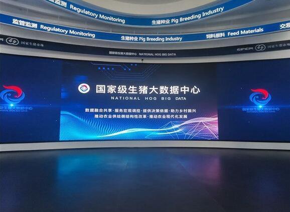 """重庆:大数据""""喂""""猪 荣昌生猪养殖的智慧实践!"""