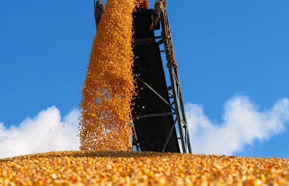 3月22日饲料原料:中国大量采购美国大豆玉米,玉米豆粕翻身无望?