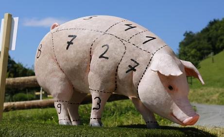 2400头美国种猪落户四川,天价丹麦猪入境,土猪或将灭绝?