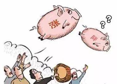 传统消费淡季下,叠加进口冻品及小白条冲击,猪价何时发出反弹信号?