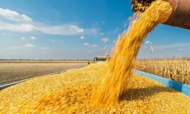 玉米跌破1.5元/斤,豆粕回落800元/吨!金新农、特驱、大台农等宣布饲料降价