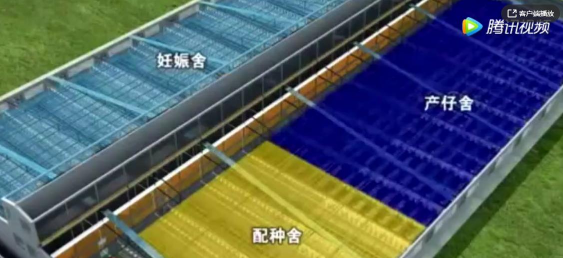 养猪实用设计!中国好几亿的养猪场建设3D原理视频