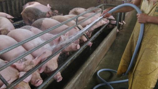 2021年1季度新增生猪产能情况:西南云贵川及广东新增产能区,东北热情消散