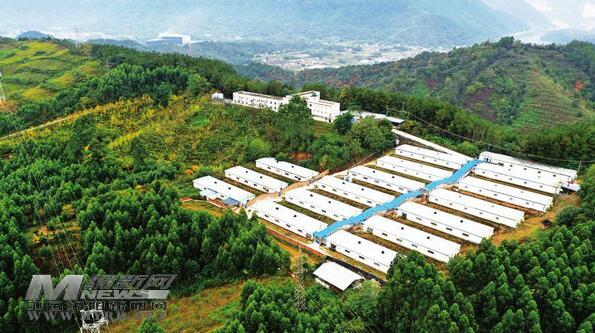 """四川:江油以""""一基地、两核心、三片区""""为架构的生猪种业园区!"""