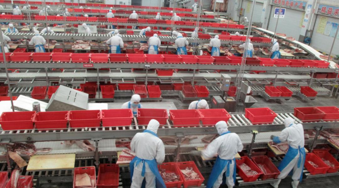 双汇:南方非法疫苗的使用支撑了猪价,通过增加进口来弥补产量缺口