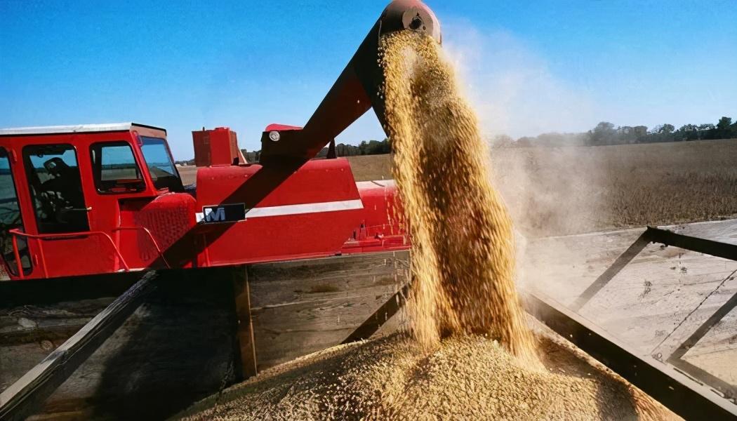 """3月31日饲料原料价格:豆粕压力重重,玉米跌至1.4元,还能""""翻身""""?"""