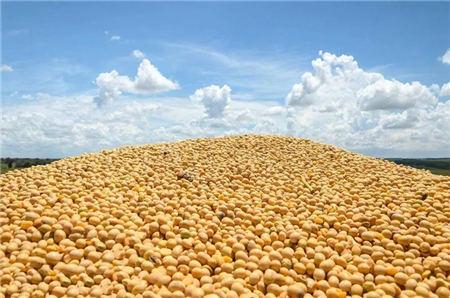 一线调研!山东地区豆粕产业实地调查,需求预增100多万吨