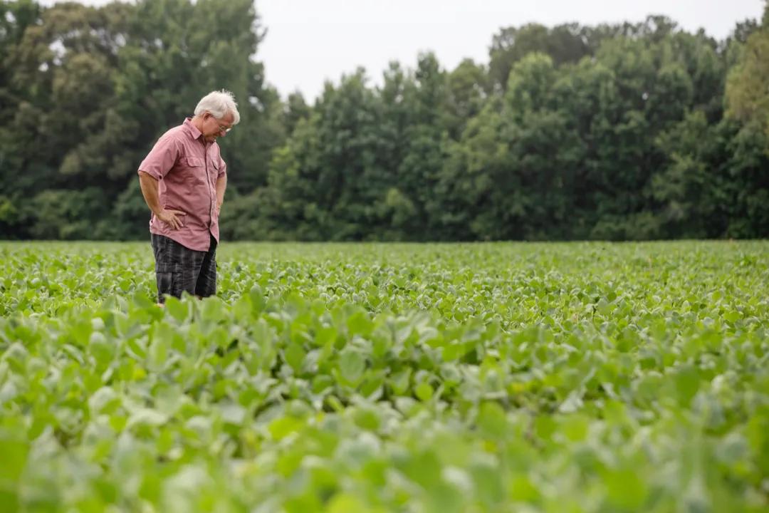 死守18亿亩耕地红线,怎么还换不来粮食自由?