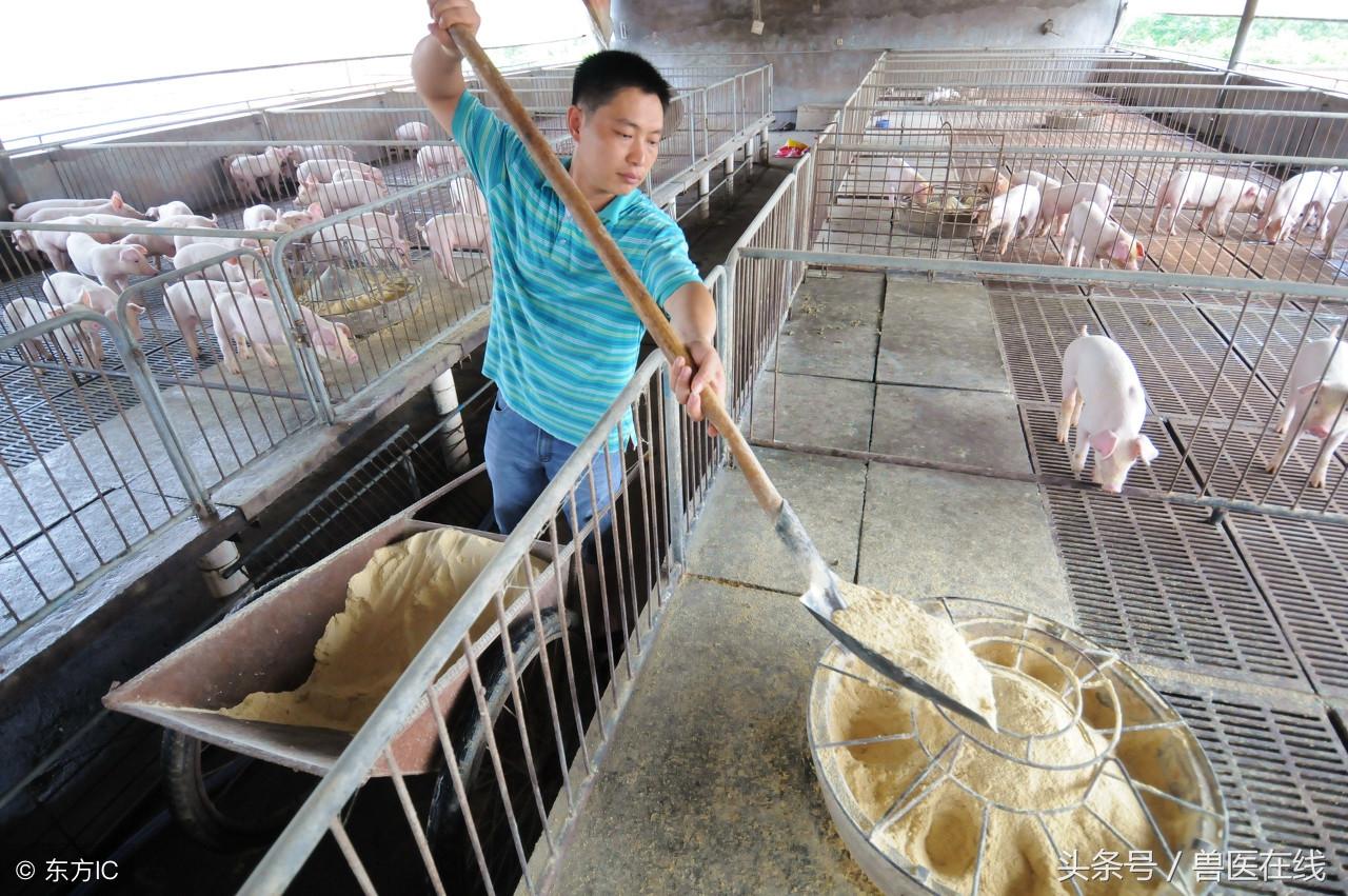 三分钟搞懂预混料、浓缩料、全价料的区别,总有一款适合你的猪场