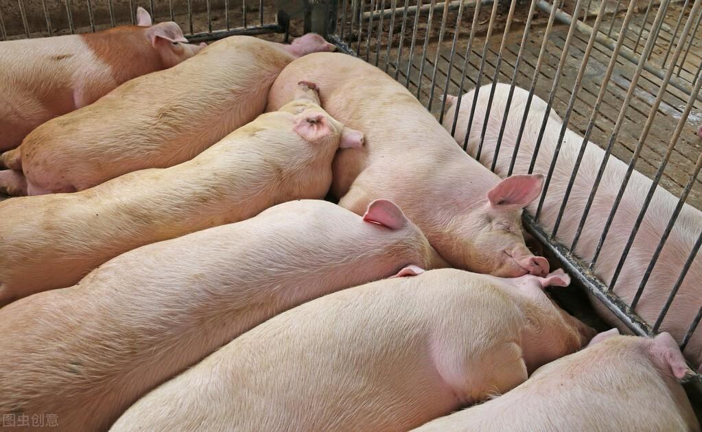 在全国疫情普遍爆发的情况下,猪场一定要做好生物安全管理