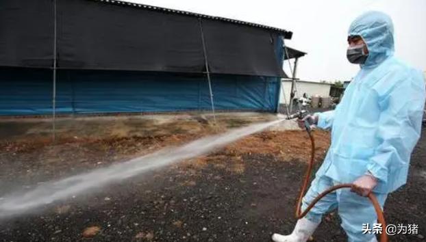 养猪场(户)雨季非洲猪瘟高发窗口期预警告知书