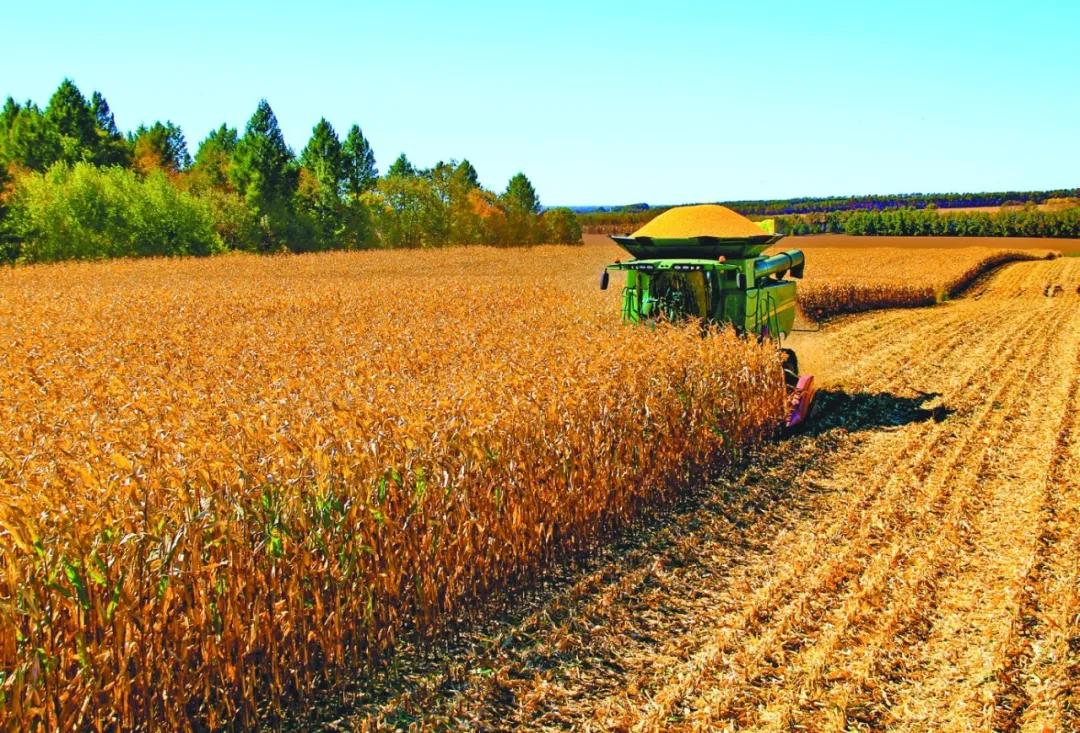 4月8日饲料原料价格:豆粕行情蠢蠢欲动,利空释放玉米会止跌?