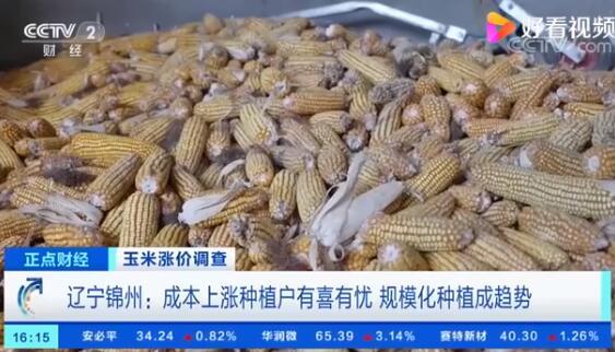 玉米价格创历史新高 业内人士:或将稳中有降!