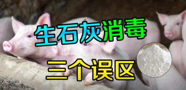 生石灰在猪场消毒的三大误区,有不少养猪人用错了,你做对了吗