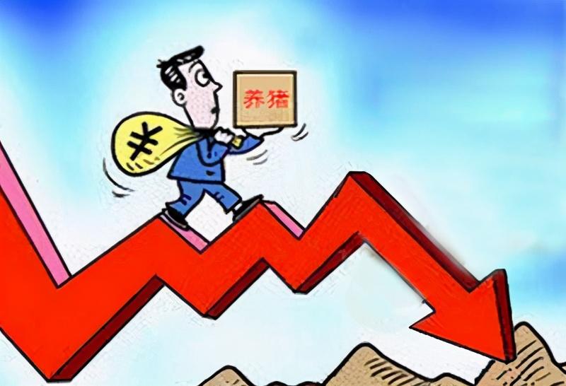 """猪价""""崩溃"""",仔猪价格跟跌,利润越发微薄!散户:还有转机?"""