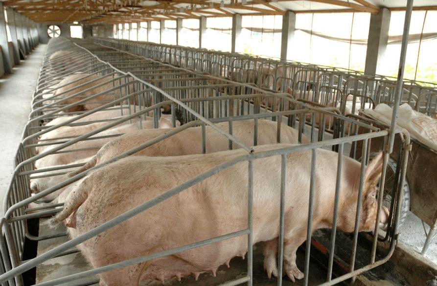 猪场生物安全体系建设之生物安全等级划分和功能区域布局