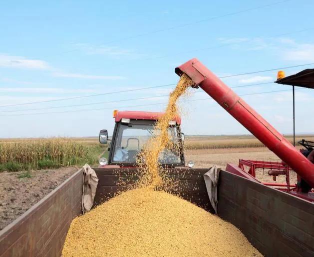 """""""不该坐地起价的""""!失去中国市场之后,美国大豆崩了"""