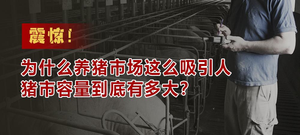 惊!为什么养猪市场这么吸引人,猪市容量到底有多大?