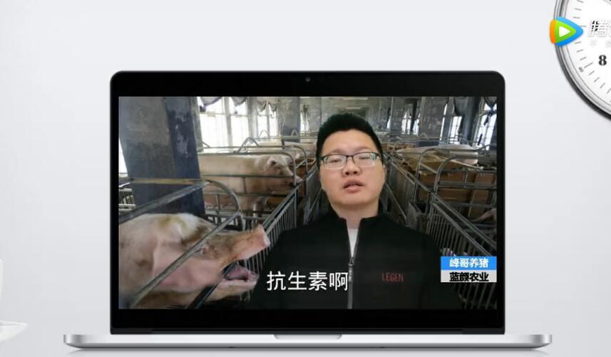 母猪配种的时候加上抗生素,能够多产子,这属实吗?