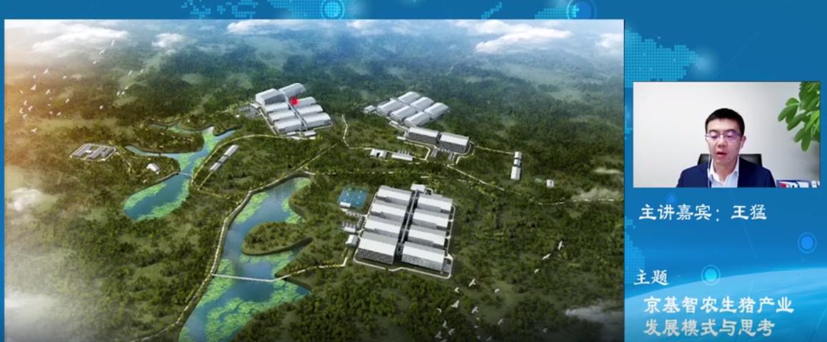 王猛:京基智农生猪产业发展模式与思考