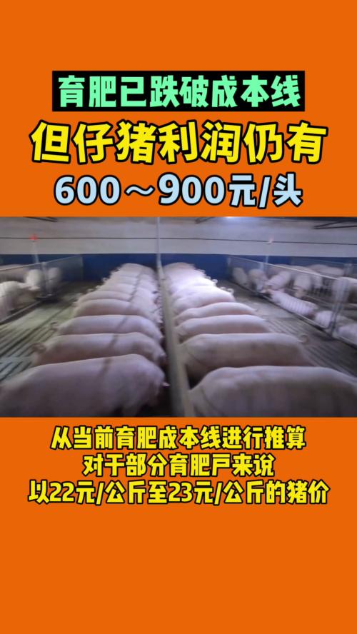 育肥已跌破成本线,但仔猪利润仍有600-900元/头!