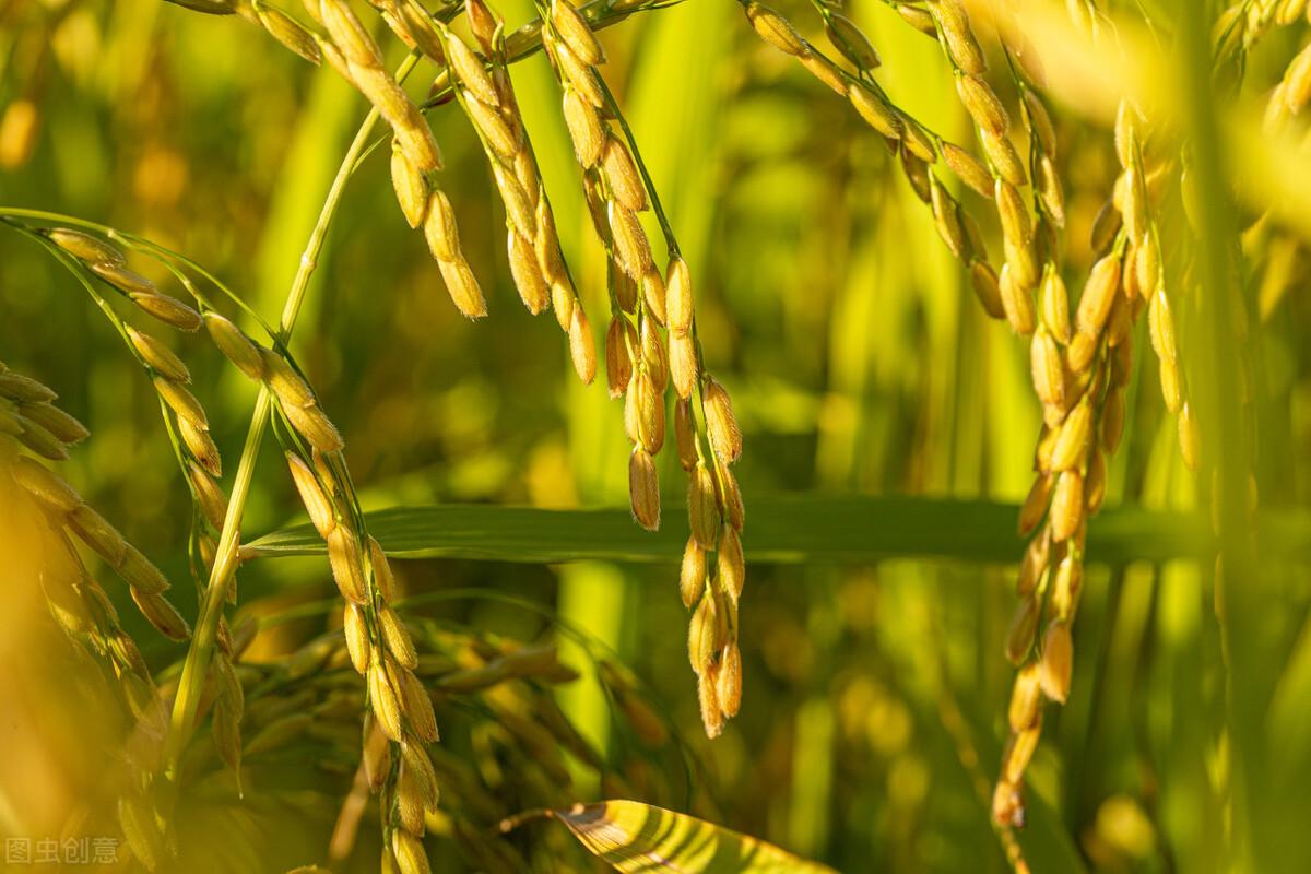 全球粮价连涨10个月,我国粮食进口量大涨400%,玉米豆粕却还在跌?