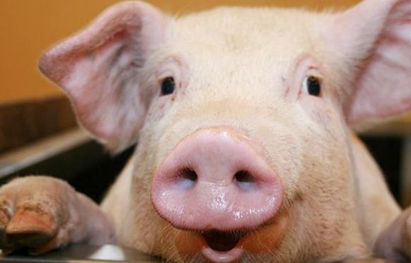 专家预测:猪价大反攻,10大猪企出栏低于预期!真正的大涨在5-6月份!