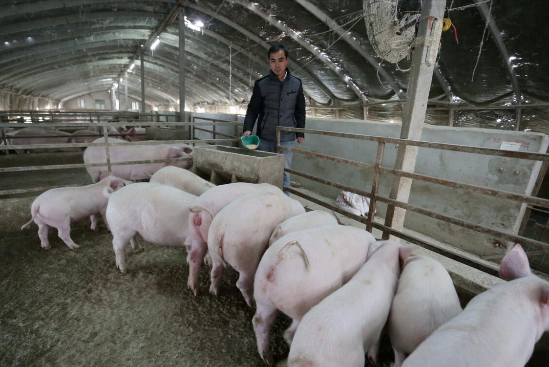 """4月18日20公斤仔猪价格,猪企价格之争,仔猪成本""""至关重要""""?"""