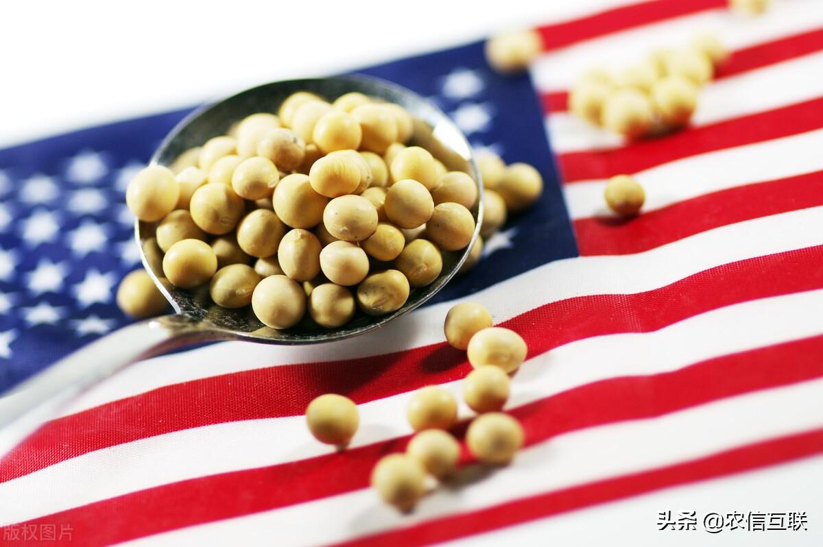 """巴西大豆出口面临威胁,我国又要转头买美豆?""""缺豆""""危机要来?"""