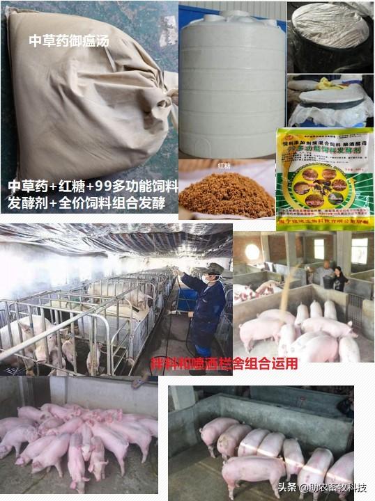原创 运用中草药防治非洲猪瘟有效吗?组方和有效防治措施分享
