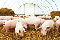 """4月21日生猪价格跌幅超29%,猪价开始""""绝地反击""""!散户:能坚挺到5月?"""