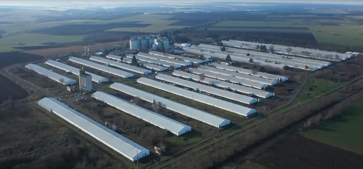 保加利亚全国最大猪场——阿贾克斯集团7000头母猪场