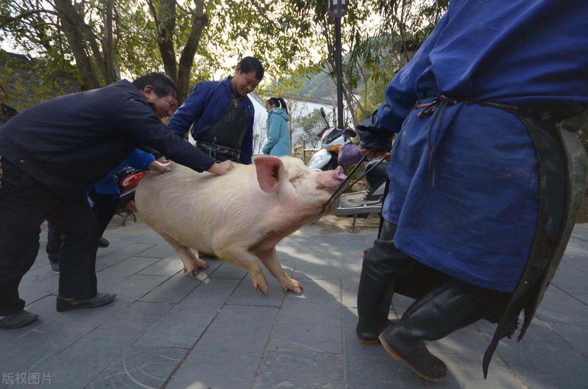 非洲猪瘟病毒又有三大新变化,感染面扩大,猪场要做好防备